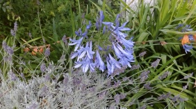 In the herbaceous border
